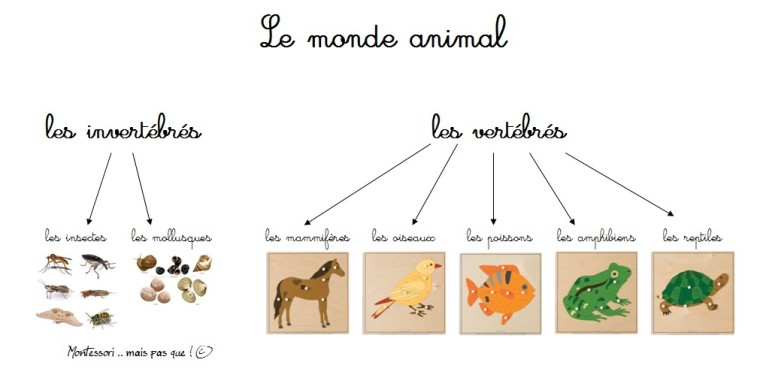 les classes animales